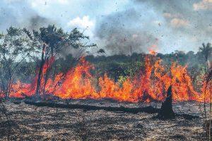 Amazonas 'chora' em chamas